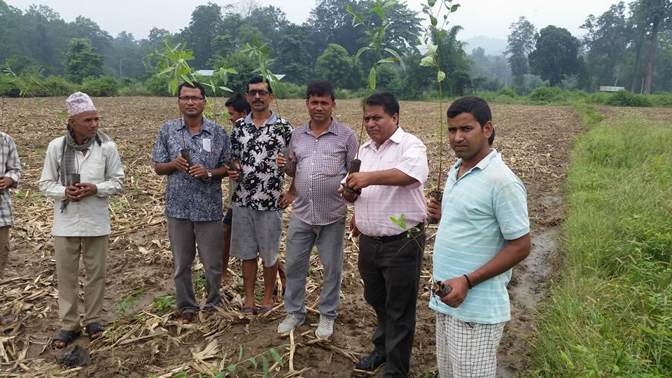 Banke observed plantation!