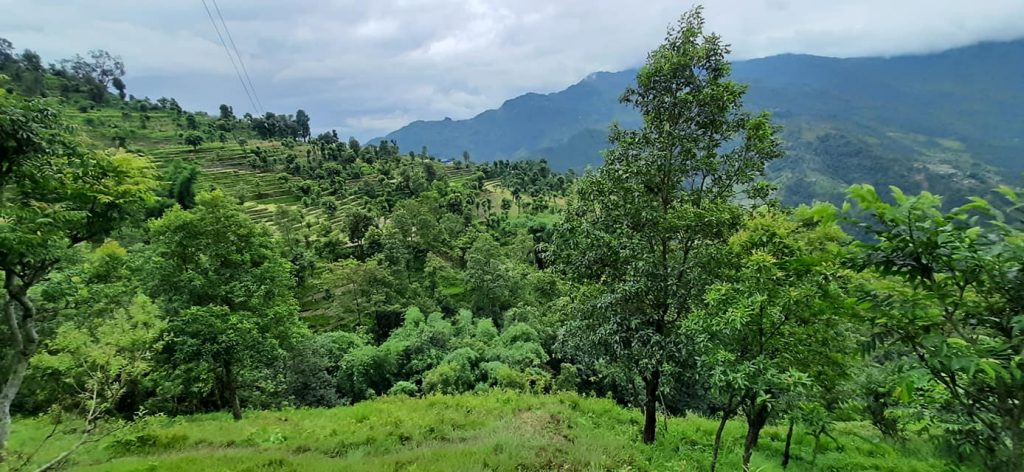 Beautiful Family Forest in Gorkha !